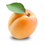 Grab and download Apricot PNG Picture