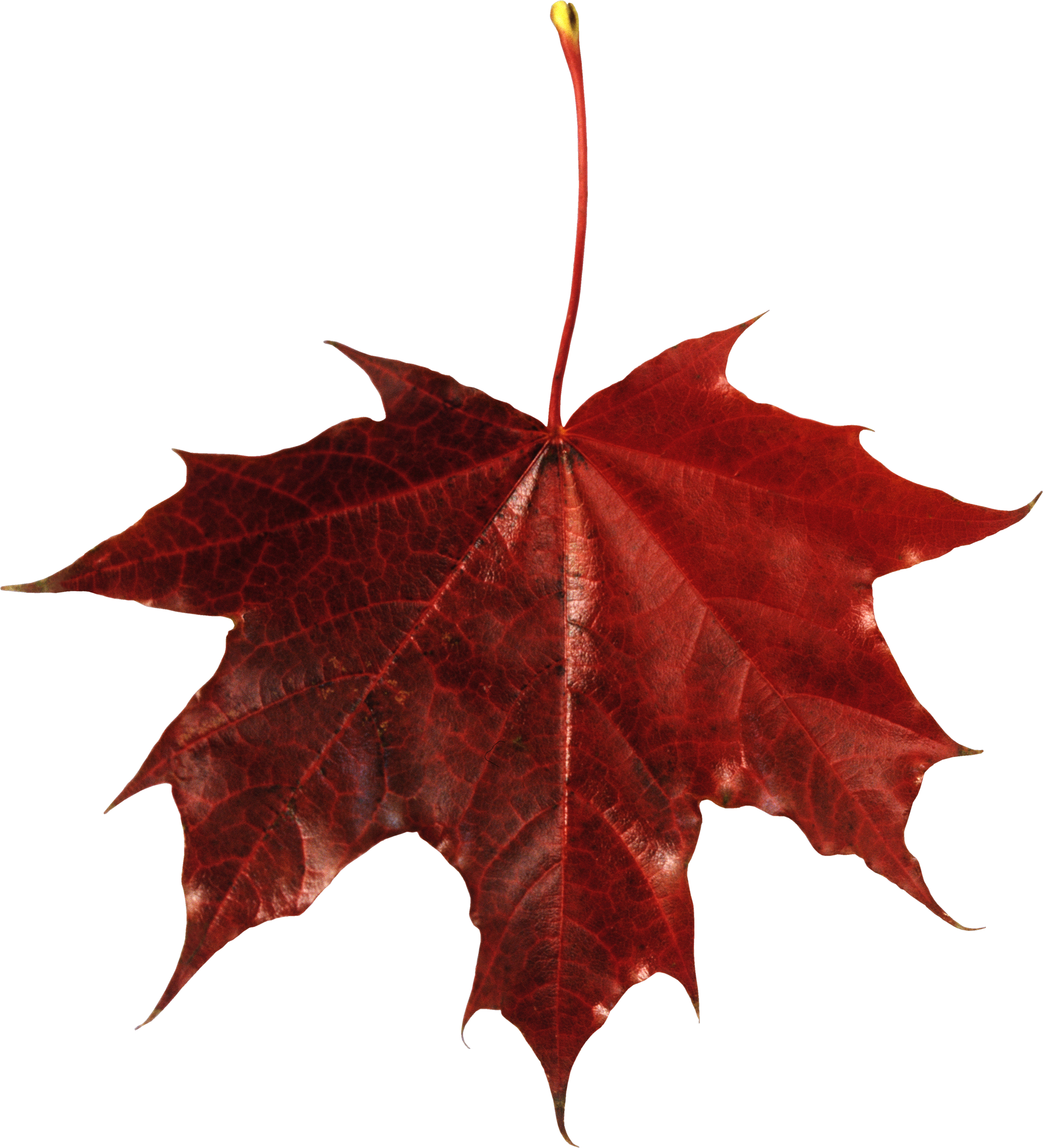 Autumn Leaves Transparent PNG Image | Web Icons PNG