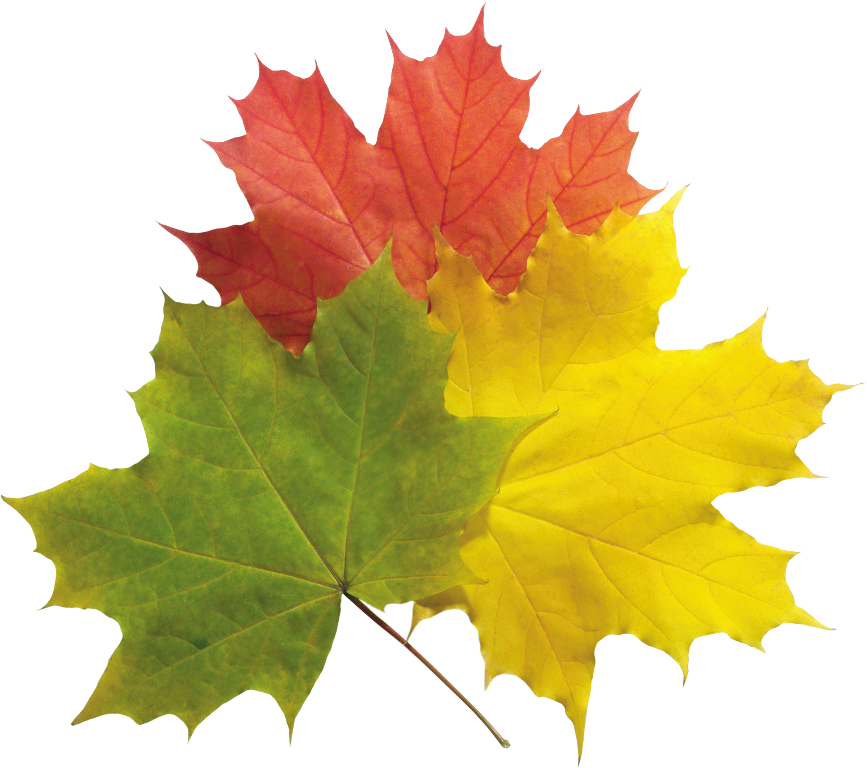 Free download of Autumn Leaves Icon Clipart