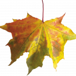Best free Autumn Leaves In PNG