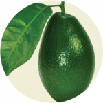 Grab and download Avocado Icon Clipart