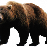 Now you can download Bear Icon PNG