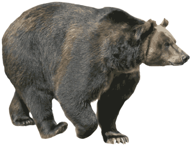 Download this high resolution Bear PNG