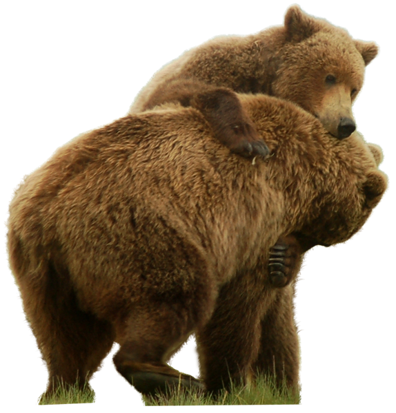Grab and download Bear PNG in High Resolution