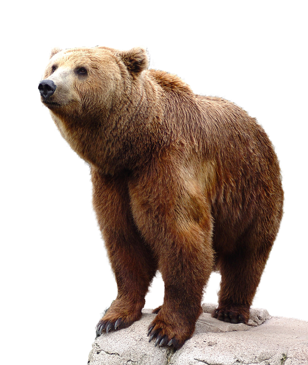 Download and use Bear PNG Picture