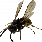 Now you can download Bee PNG Picture
