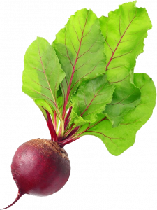 Grab and download Beet High Quality PNG