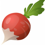 Best free Beet PNG in High Resolution