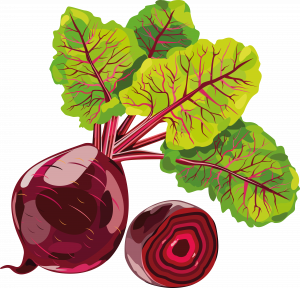 Download this high resolution Beet PNG Image