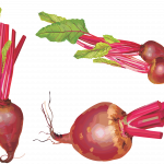 Grab and download Beet Icon