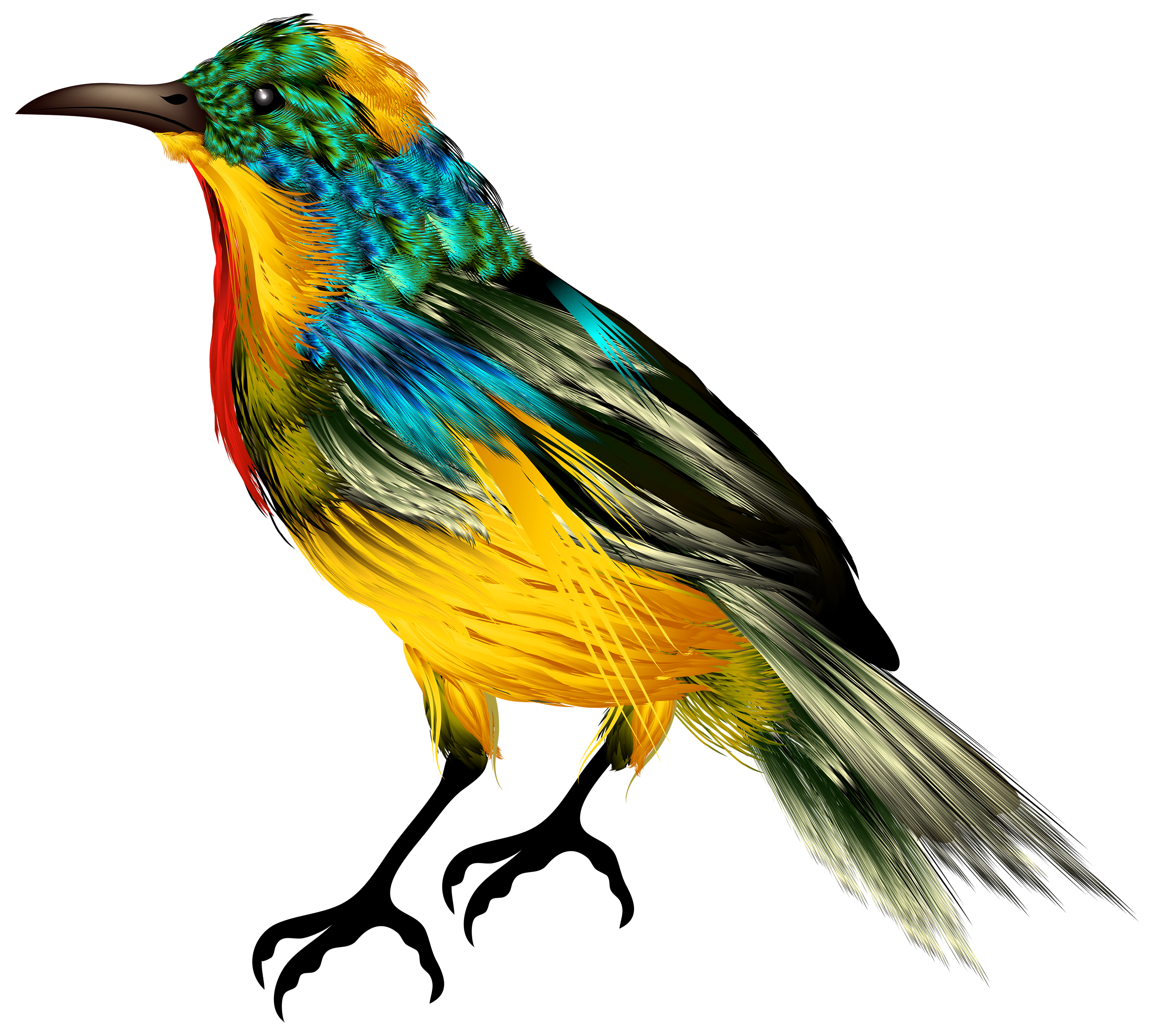 Free download of Birds  PNG Clipart