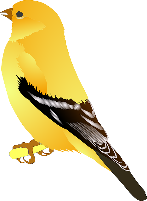 Download for free Birds Icon PNG