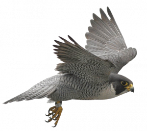 Download and use Birds Transparent PNG Image