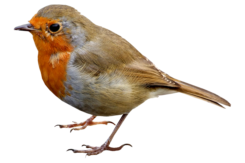 Download and use Birds PNG