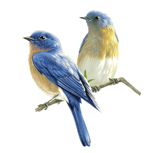 Now you can download Birds PNG Picture