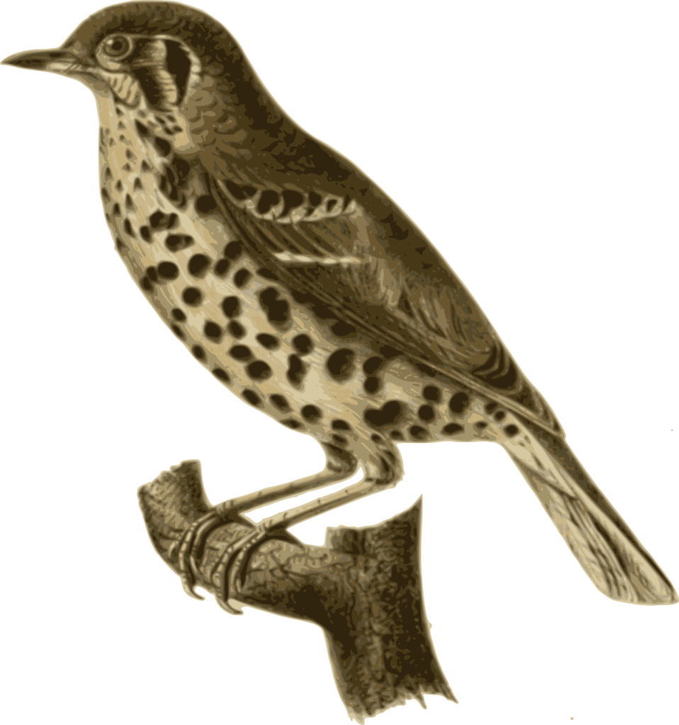 Best free Birds PNG Picture