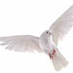 Download this high resolution Birds Icon PNG