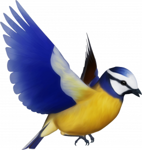Download this high resolution Birds  PNG Clipart