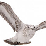 Download this high resolution Birds PNG Picture