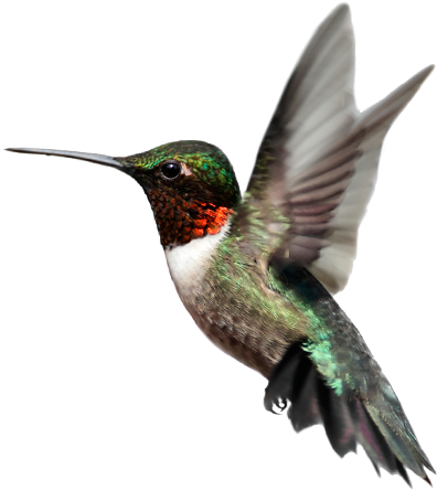 Grab and download Birds PNG Image