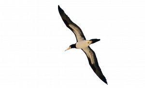 Now you can download Birds Transparent PNG Image