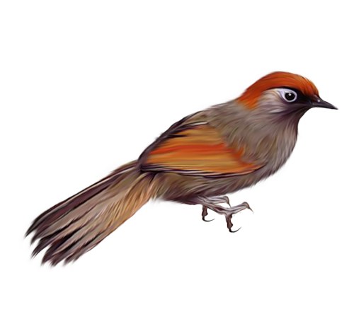 Download for free Birds Transparent PNG File
