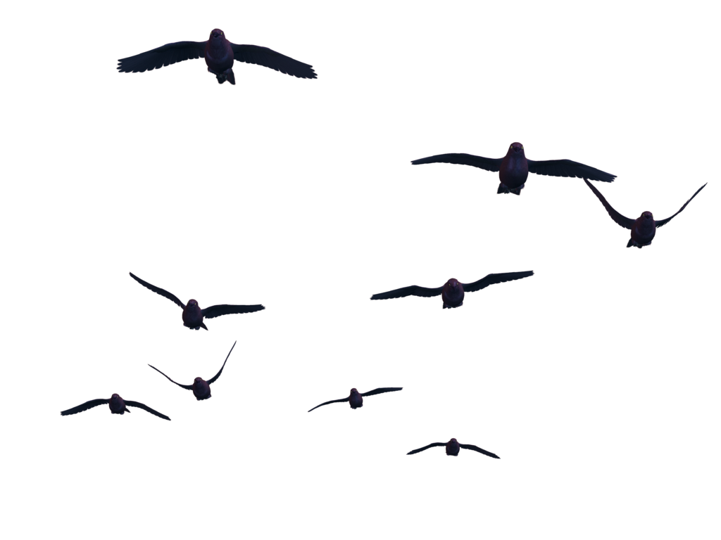 Grab and download Birds PNG Picture