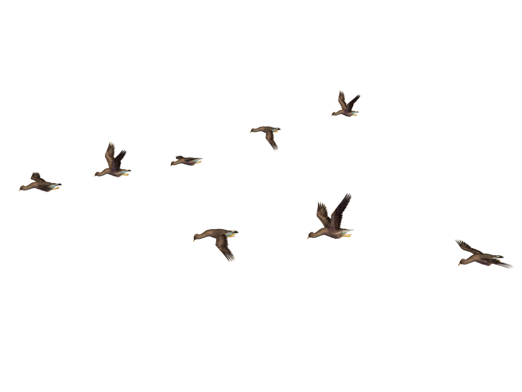 Download for free Birds PNG Icon