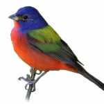 Grab and download Birds PNG in High Resolution