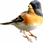 Best free Birds PNG Icon
