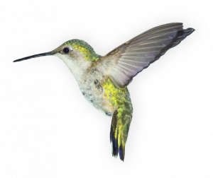 Download and use Birds  PNG Clipart