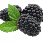 Free download of Blackberry In PNG