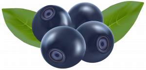 Now you can download Blueberries Icon PNG