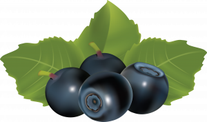 Now you can download Blueberries PNG Image