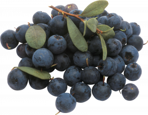 Grab and download Blueberries PNG Image Without Background