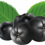 Free download of Blueberries PNG Image