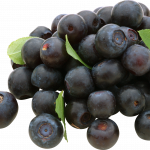 Best free Blueberries In PNG