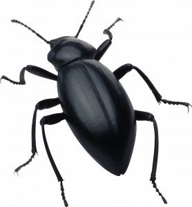 Download this high resolution Bugs Transparent PNG File