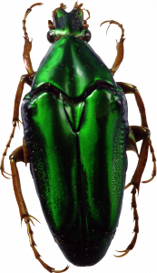 Best free Bugs PNG
