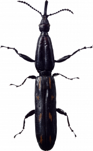 Free download of Bugs PNG Image