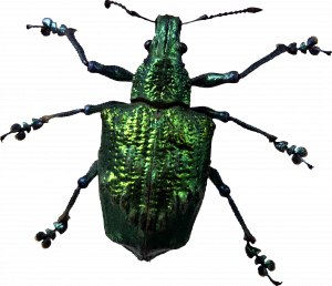 Free download of Bugs PNG Image Without Background