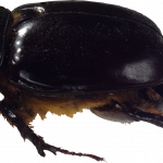 Download this high resolution Bugs High Quality PNG