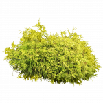 Download this high resolution Bushes PNG in High Resolution