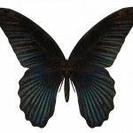 Download this high resolution Butterfly Transparent PNG File