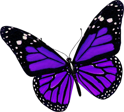 Best free Butterfly In PNG