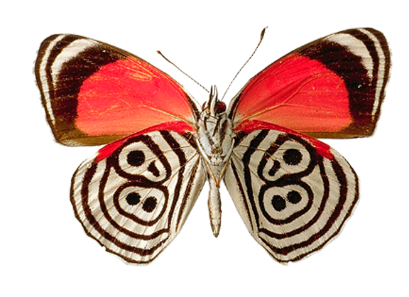 Download for free Butterfly PNG in High Resolution