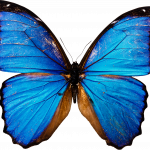 Grab and download Butterfly PNG Image Without Background