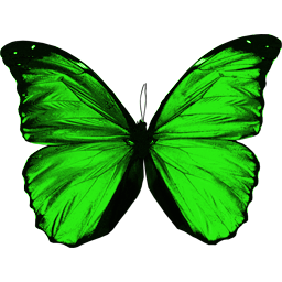 Butterfly PNG Image | Web Icons PNG
