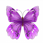Best free Butterfly PNG Image Without Background