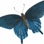 Download for free Butterfly PNG Icon